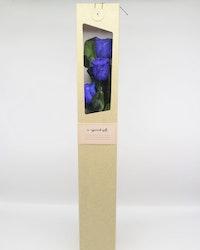 Evighetsros Giftbox  - Mörk blå