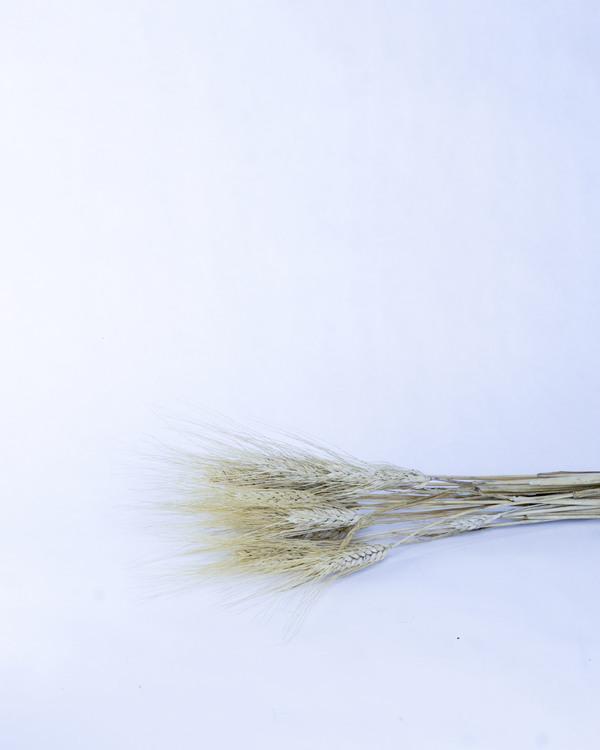 Vete blond skägg - Naturell - A kvalité