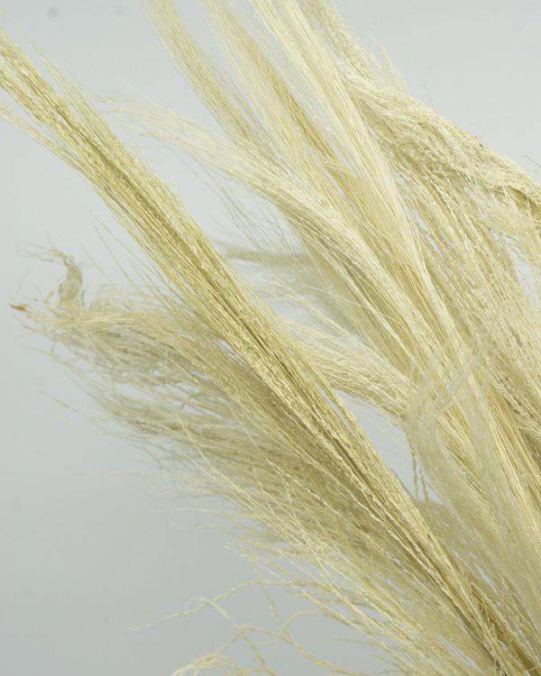 Bromsgräs - Blekt vit