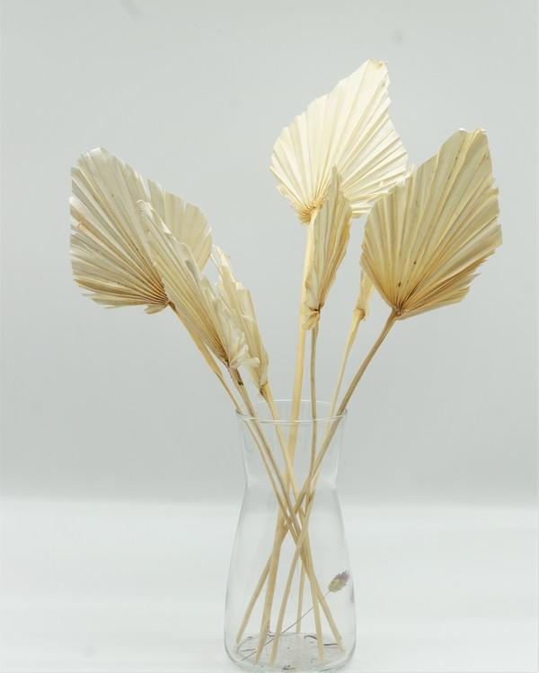 Palm Spear 3 st. - Blekt vit