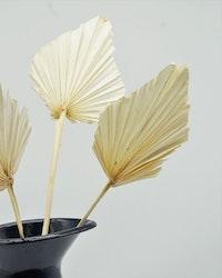 Palm Spear 3 st. - Blekt vit - Torkade blommor