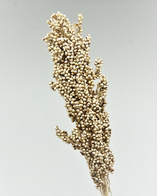 Indian Corn 3 st. Naturell