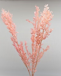 Ruscus  100 gr. Blekt rosa