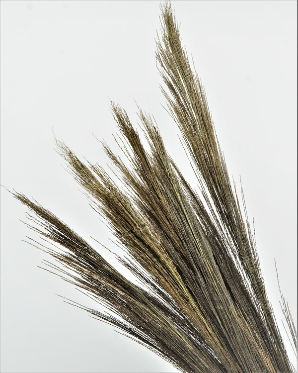 Bromsgräs - Naturell