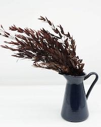 Konserverad Eucalyptus Parvifolia-Röd