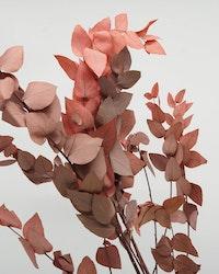 Konserverad Eucalyptus Stuartiana - röd