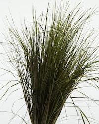 Konserverade Strip Gräs - Grön