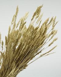 Spiga d'Oro - Naturell