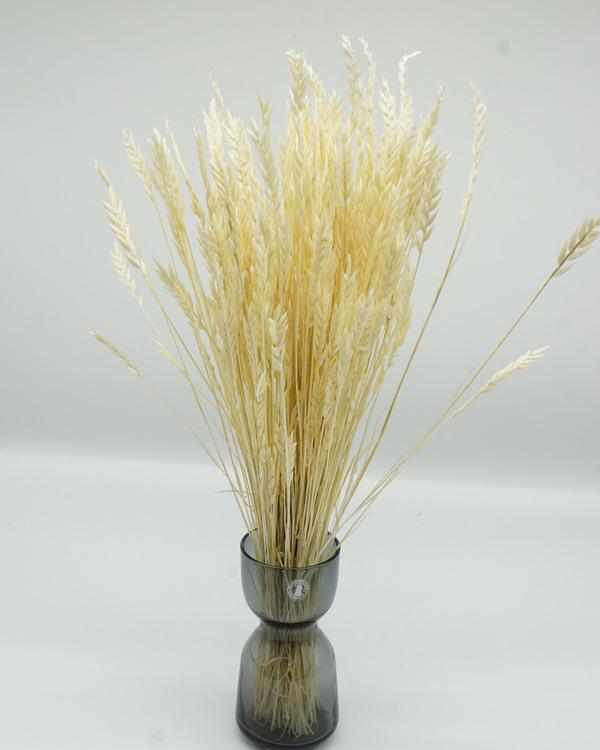 Spiga d'Oro - Blekt Vit - Torkade blommor