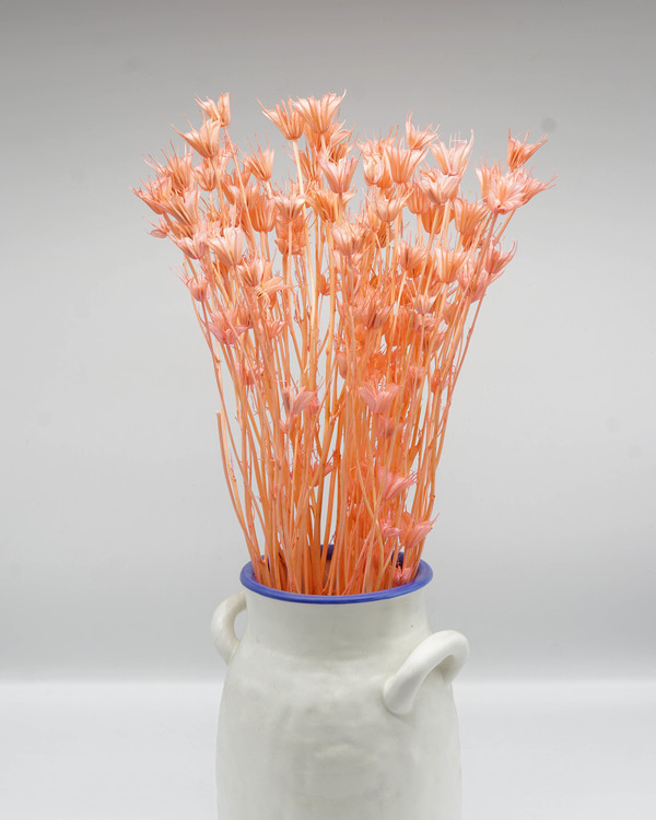 Nigella Orientalis - Blekt Rosa