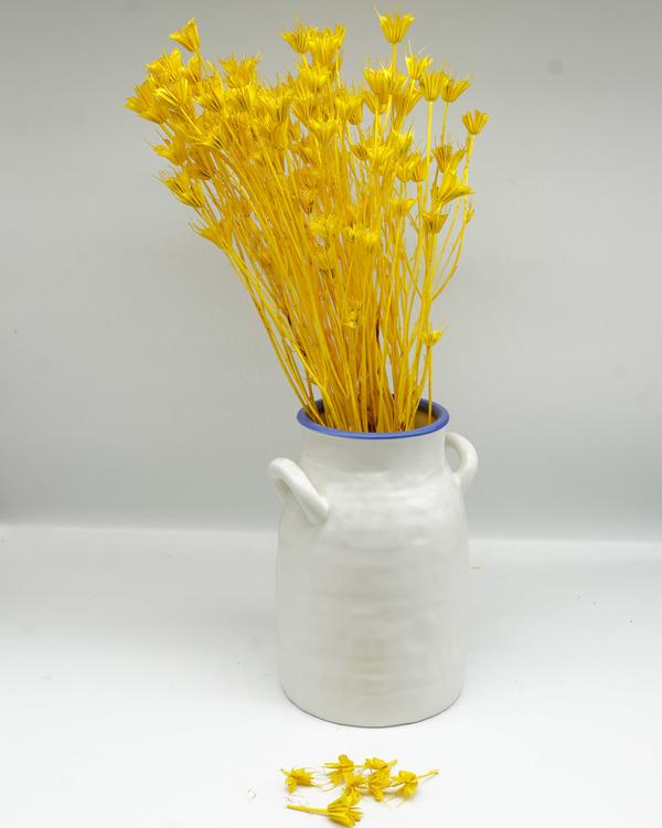 Nigella Orientalis - Blekt gul