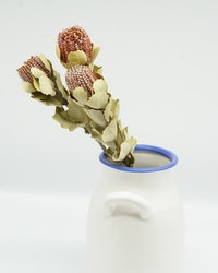 Banksia Naturell - 3 st.