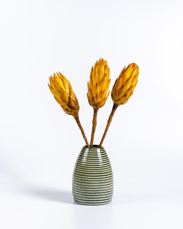 Protea - Röd - Eterneller - Torkat - Blommor - Torkadeblommor