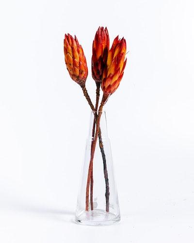 Protea Repens - Röd