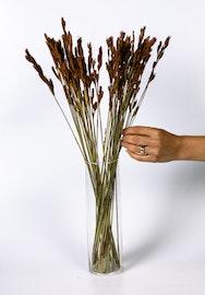 Thatch Reed - Naturell