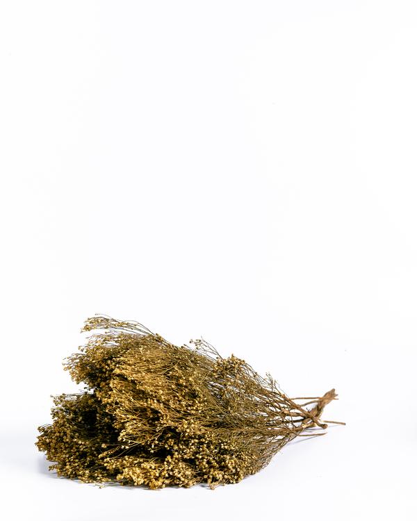 Torkade Broom Bloom - Naturell
