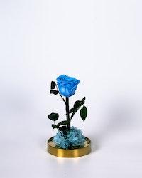 Roskupa - Blå