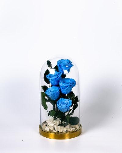 Roskupa Stor - Blå