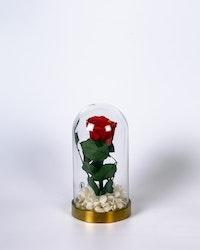 Roskupa - Röd
