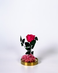 Roskupa - Rosa