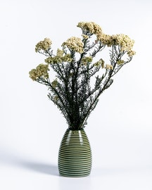 Konserverad Diosmi ( Rice flower) - Vit