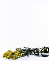 Konserverad Diosmi - Gul