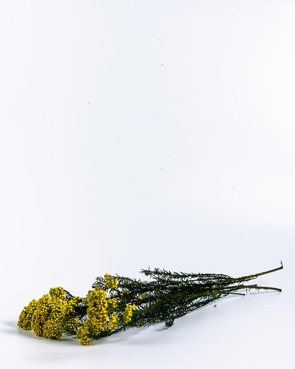 Konserverad Diosmi - Miljövänlig