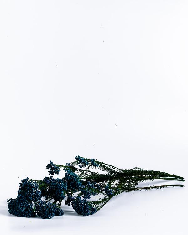 evighetsblommor - evighets blommor - konserverade blommor - för alltid