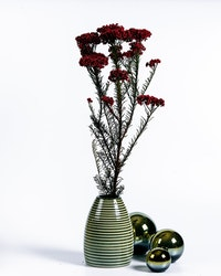 Konserverad Diosmi - Röd