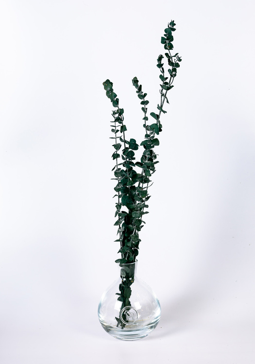 Konserverad Eucalyptus Baby - Blå