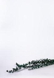 Konserverad Eucalyptus Baby - grön blå - Evighetsblommor