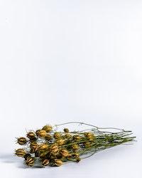 Nigella - Naturell