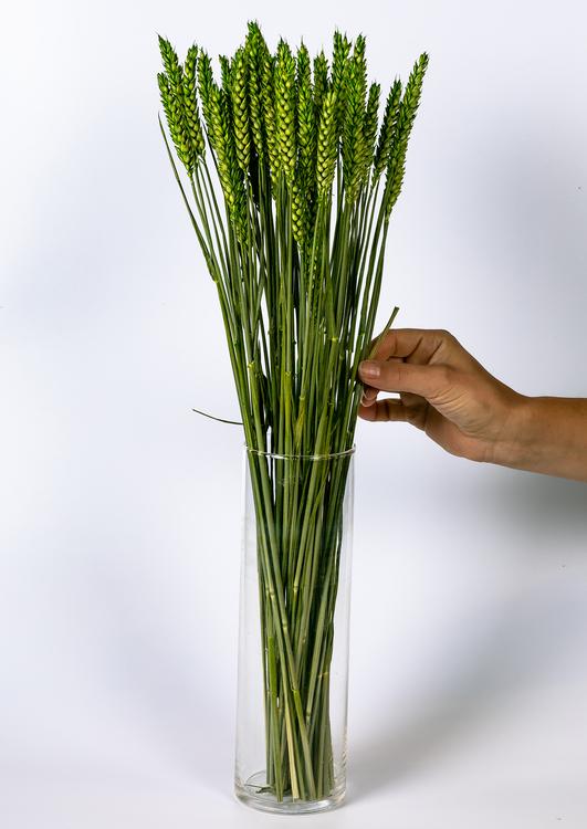 Torkade blommor - Torkadeblommor - Foreverflora