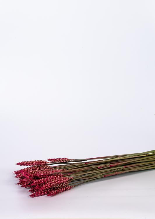 Eterneller - oasis - Sverige - Göteborg - Torkade blommor - Göteborg