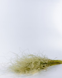 Stipa Penata - Naturell