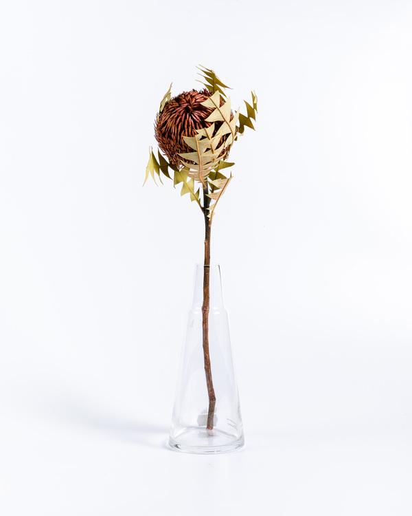 Banksia Baxteri - Old Rose