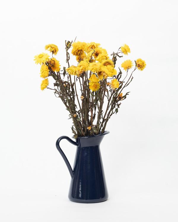 Helichrysum - Gul
