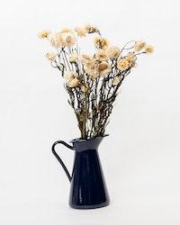 Helichrysum - Vit