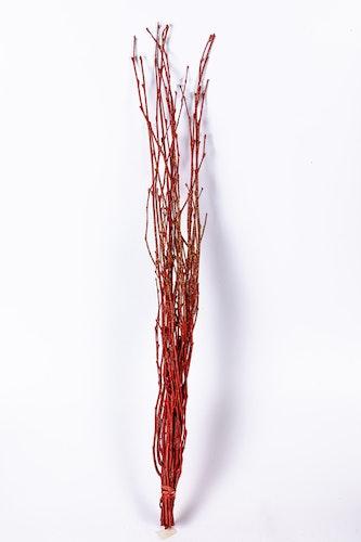 Birch 5 st.  - Röd