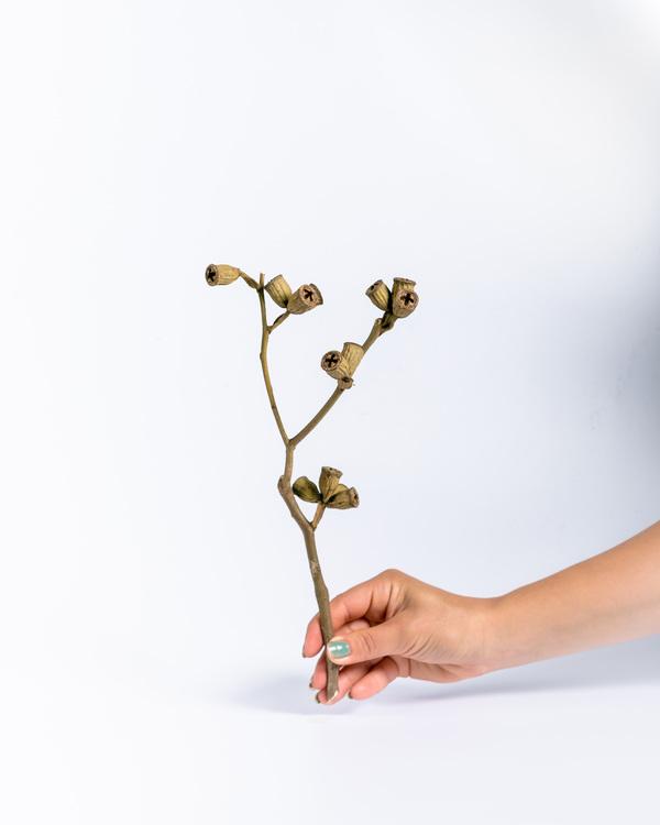 Conical gum branch - Pynta själv