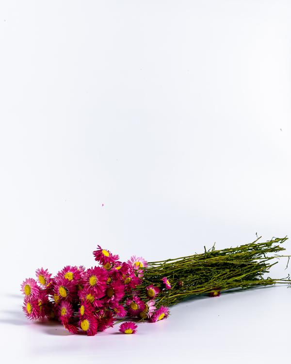 Torkade blommor - Eterneller - Torkat - Torkadeblommor