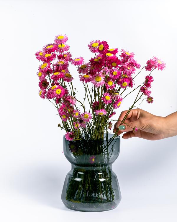 Torkade Acroclinium - Rosa