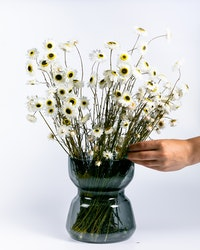 Acroclinium - Vit - Torkade blommor