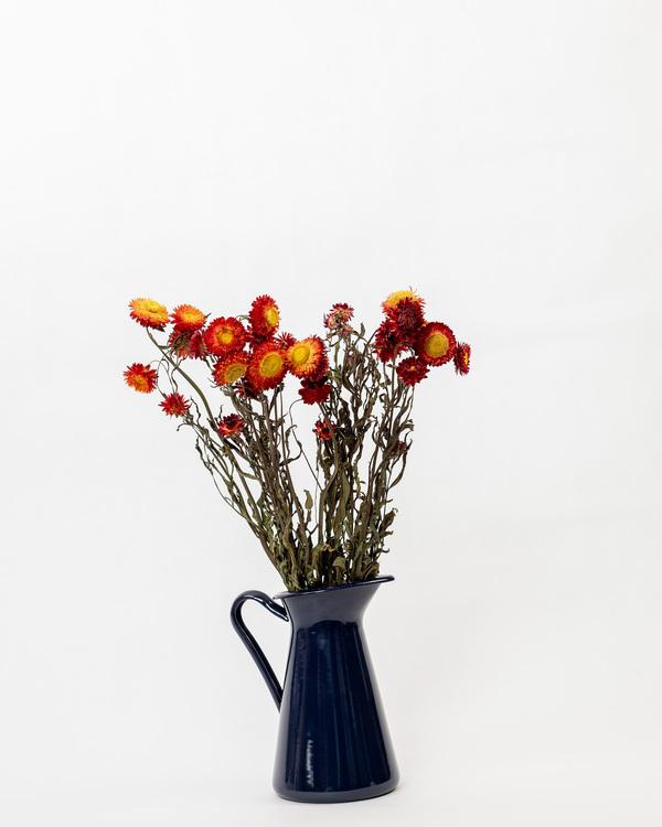 Helichrysum - Röd