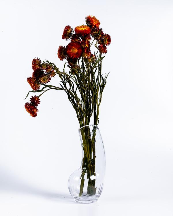 Torkade Helichrysum - Röd