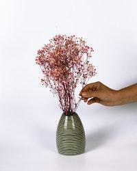 Brudslöja (gypsophila) - Rosa