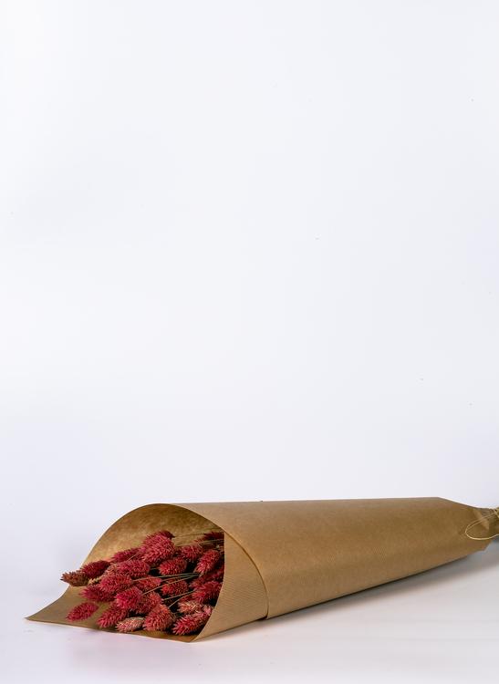 Torkade Phalaris - Rosa