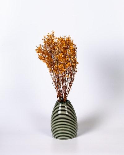 Brudslöja (gypsophila) - Orange