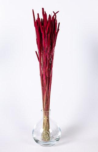 Phaleum - Rosa