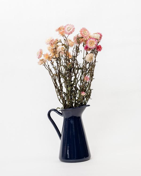 Helichrysum - Rosa